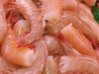 Aquaculture Farm to Grow 500,000 Lbs of Shrimp in Shipping Containers ... In the Mohave Desert | Innovation in agri | Scoop.it
