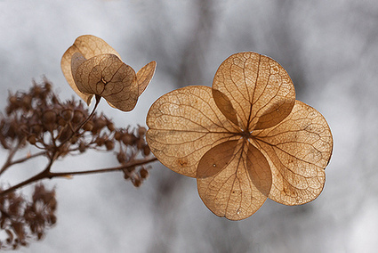 Fleur d'hiver | pour mon jardin | Scoop.it
