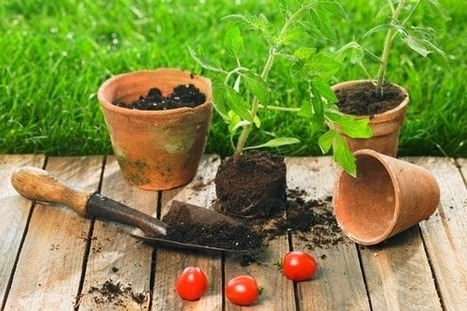 8 gardening and landscaping apps every gardener must have | Gardening Hand Tools Sale | Scoop.it