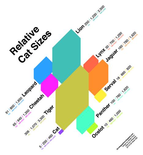 Relative Cat Sizes | Infographics | Scoop.it