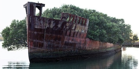 102-Year-Old Abandoned Ship is a Floating Forest | Gaia Diary | Scoop.it