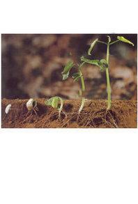Les grands principes du jardinage biologique | Ressources d'autoformation dans tous les domaines du savoir  : veille AddnB | Scoop.it