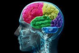 Así afecta a nuestro cerebro Google | Brain, mind, consciousness | Scoop.it