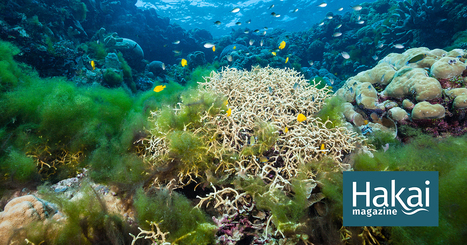 What Happens When a Coral Reef Dies? | Hakai Magazine | Lorraine's Environmental Change &  Management | Scoop.it