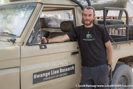The aftermath of Cecil - interview with lion researcher Brent Stapelkamp   Trophy Hunting: It's Impact on Wildlife and People   Scoop.it