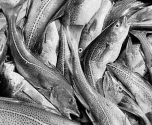 La consommation de poissons associée à la présence de mercure dans le sang | Toxique, soyons vigilant ! | Scoop.it