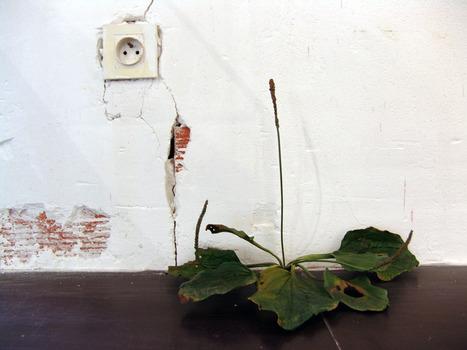 "Tony Matelli: ""Weed"" | Art Installations, Sculpture, Contemporary Art | Scoop.it"