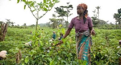 Le Gabon va mettre sa stratégie nationale sur la sécurité alimentaire et nutritionnelle à jour - Le Nouveau Gabon | Chimie verte et agroécologie | Scoop.it