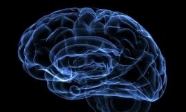 New 'window' into the brain found (ScienceAlert)   Brain Momentum   Scoop.it