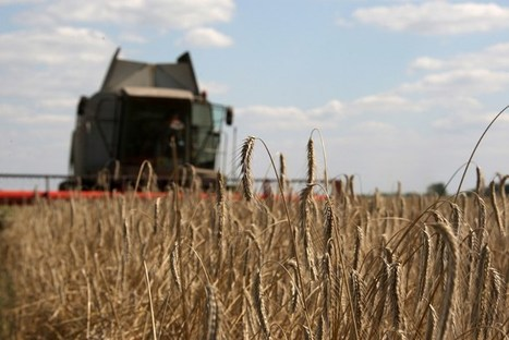 Russia, Kazakhstan face more wheat quality problems | Food Insecurity | Scoop.it
