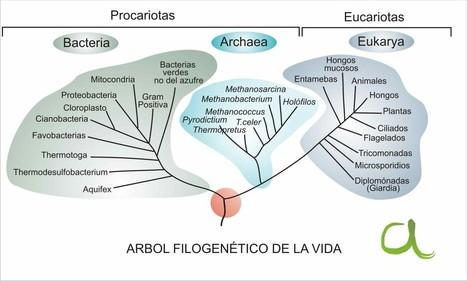 Clasificación de los seres vivos | AcercaCiencia | Biologia | Scoop.it