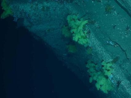 Coral Hotspots found off Northeast US Coast | X-Ray Magazine | All about water, the oceans, environmental issues | Scoop.it