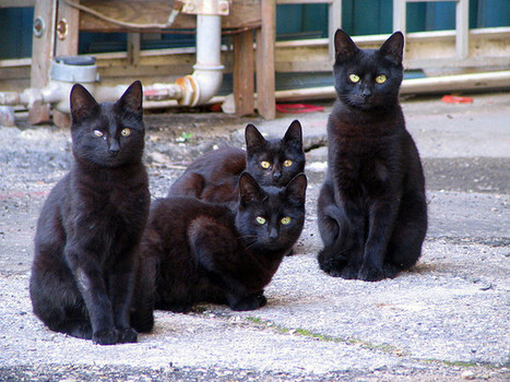 17 Reasons to Own a Black Cat | Animal Bliss | Animal Welfare | Scoop.it