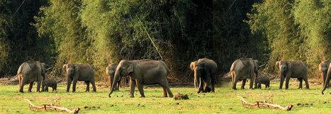 Honeymoon in Kerala | Kerala Holiday Packages | Kerala Tour Packages | your kerala holidays | Scoop.it