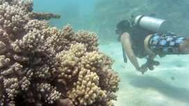 Just 7% of Australia's Great Barrier Reef escapes bleaching - BBC News   Ecosystems at Risk   Scoop.it