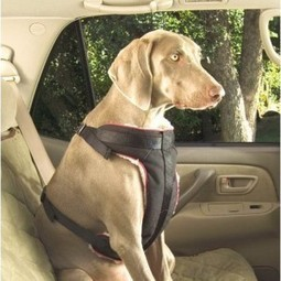 Car Safety Tips And Accessories For Your Dog | Fab Finds | Scoop.it