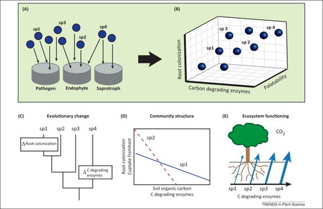 Ecological understanding of root-infecting fungi using trait-based approaches (Trends in plant sceince 2014) | fashion | Scoop.it