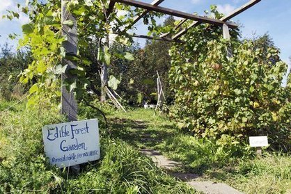 Come on Home!: Ecological Agriculture and Sixteen Wonderful Farms that Point the Way | Sustain Our Earth | Scoop.it
