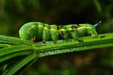 חיי טבע בזעיר אנפין | צילום עולמי | Scoop.it