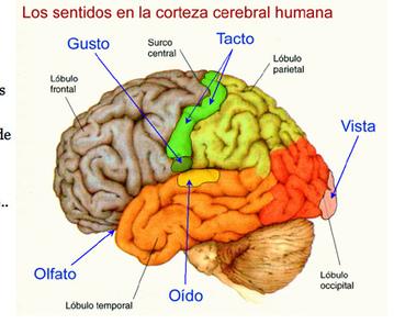 gretaguerra | Procesos mentales implicados en el comportamiento y el aprendizaje, UDL | Scoop.it