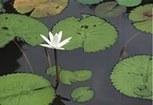 Atención Plena Caribe | Atención plena - Mindfulness | Scoop.it