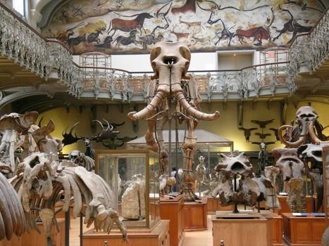100 millions d'euros pour les vieux os du Muséum | Merveilles - Marvels | Scoop.it
