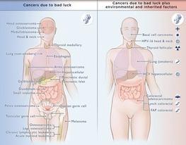 Quel est le poids du hasard dans l'apparition des cancers ? | genome editing | Scoop.it