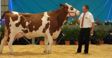Baraqueville. Les 10es journées laitières se terminent aujourd'hui - LaDépêche.fr | Un monde laitier | Scoop.it