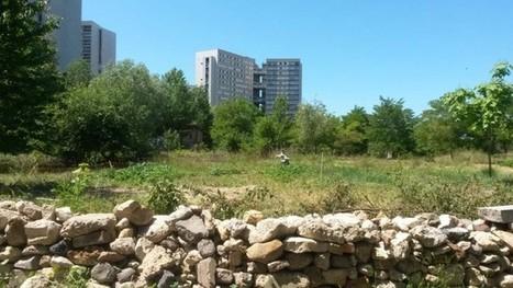 Implantation d'habitations près de bâtiments agricoles : fin de la confusion jurisprudentielle | Veille en Urbanisme | Scoop.it