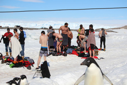 Bain de Noël à #DDU Terre Adélie #Antarctique #manchot | Hurtigruten Arctique Antarctique | Scoop.it