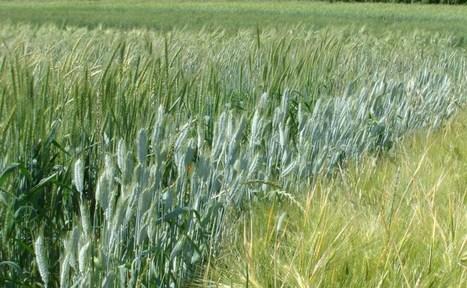 Ces graines interdites dont raffolent les agriculteurs | Questions de développement ... | Scoop.it