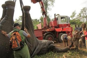 Ivory Coast pilots novel elephant rescue | GarryRogers NatCon News | Scoop.it