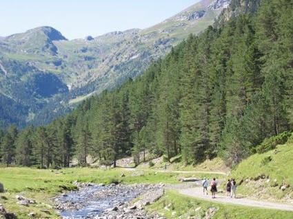Forêt du Rioumajou - Site naturel à Saint-Lary-Soulan   Christian Portello   Scoop.it