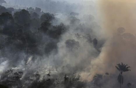 Deforestazione, allarme Amazzonia: da paradiso a inferno   Positivisme ambiental   Scoop.it