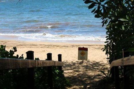 Shark attacks remain rare in Hawaii, elsewhere - Hawaii News Now | Hawaii with Aloha | Scoop.it