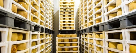 USDA to purchase cheese to help hungry and dairy farmers | Grain du Coteau : News ( corn maize ethanol DDG soybean soymeal wheat livestock beef pigs canadian dollar) | Scoop.it