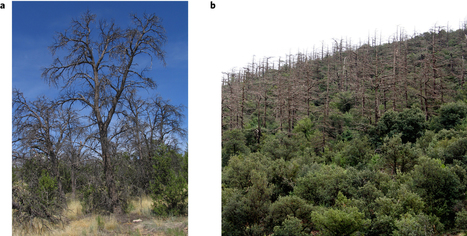 Darcy's law predicts widespread forest mortality under climate warming : Nature Climate Change | MycorWeb Plant-Microbe Interactions | Scoop.it