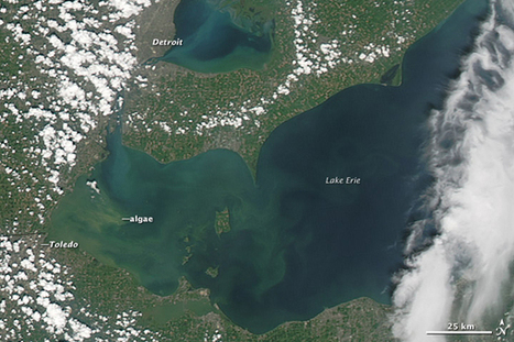 Deadly Algae Are Everywhere, Thanks to Agriculture | Ohio Wetlands | Scoop.it