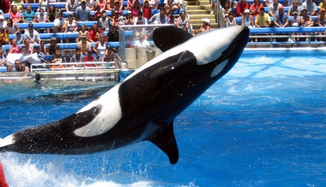 SeaWorld Responds To Twitter Disaster With A Series Of Bizarre Tweets | Nature Animals humankind | Scoop.it