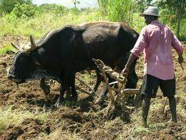 L'agriculture paysanne haïtienne | Nadinement vôtre ! | Scoop.it
