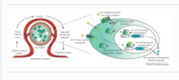 Trends in Biotechnology - From gene switches to mammalian designer cells: present and future prospects   SynBioFromLeukipposInstitute   Scoop.it