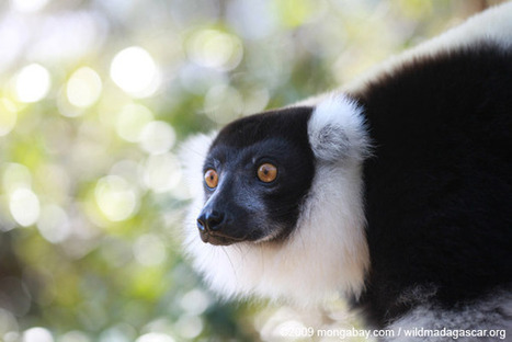 Innovative conservation: wild silk, endangered species, and poverty in Madagascar | Biodiversity IS Life  – #Conservation #Ecosystems #Wildlife #Rivers #Forests #Environment | Scoop.it