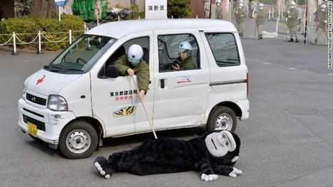 Japanese zookeepers successfully capture fake gorilla | Around the World | Scoop.it