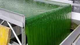 Microalgae-derived biogas a  promising alternative to fossil fuels | Biogas Power | Scoop.it