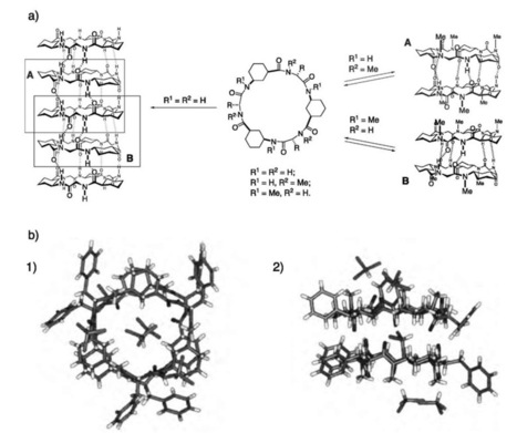 Self-Assembly of Cyclic Peptides in Hydrogen-Bonded Nanotubes Part 1(Nanotechnology) | My Research Interests | Scoop.it