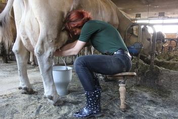 Was macht man aus Milch? | Schweizer Milchwirtschaft | Scoop.it