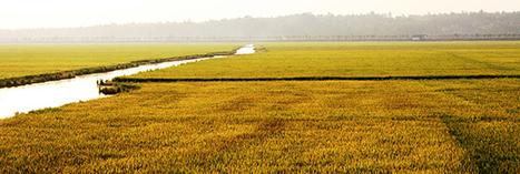 Les pesticides éliminés dans les pays en voie de développement ? | Economie Responsable et Consommation Collaborative | Scoop.it