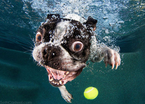 These underwater photos capture the hilarious faces of dogs when they dive | Cultural Trendz | Scoop.it