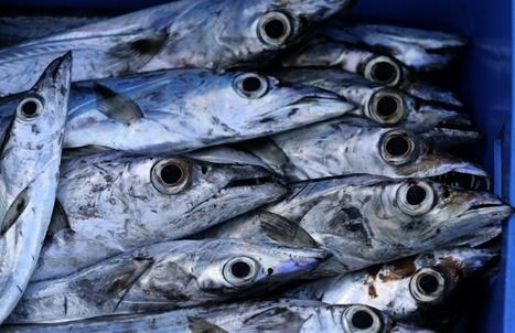 Les poissons d'eau douce cruciaux pour la sécurité alimentaire dans le tiers-monde   CIHEAM Press Review   Scoop.it