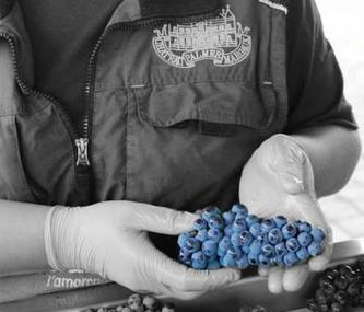 2013 Chateau Palmer Vintage Harvest Report Thomas Duroux Interview | Fine Wines | Scoop.it